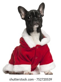 French bulldog puppy in Santa outfit, 4 and a half years old, sitting in front of white background