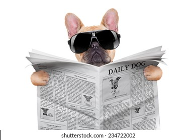 french bulldog reading the newspaper, with cool sunglasses, isolated on white background