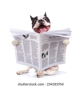 French bulldog reading newspaper over white