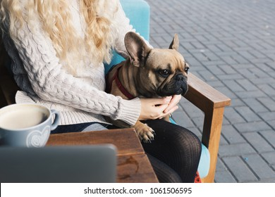 French bulldog relaxing in a cafe on blonde stylish woman's lap