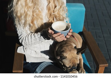 French bulldog relaxing in a cafe on owner's lap