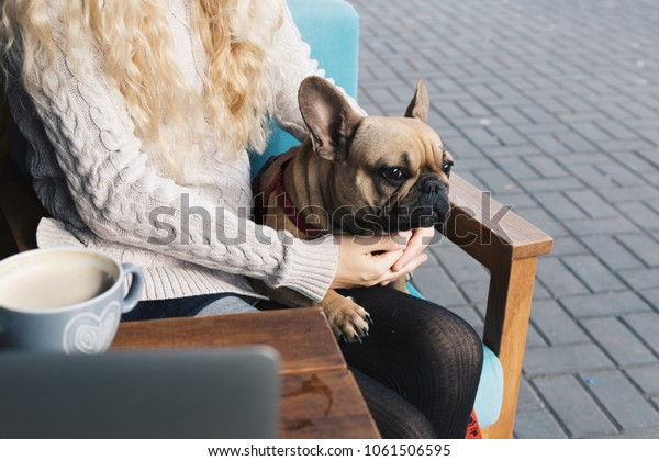 1111d0462c9b French Bulldog Relaxing Cafe On Blonde Stock Photo (Edit Now) 1061506595