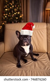 French bulldog in Santa Claus hat sitting on couch