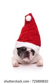 french bulldog santa lying down on white background