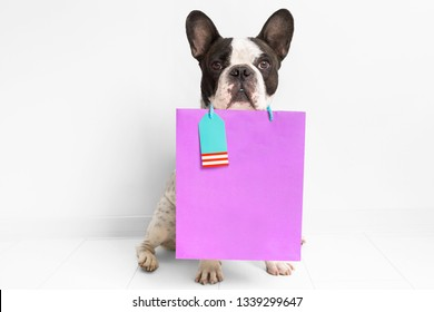 French bulldog with the shopping bag