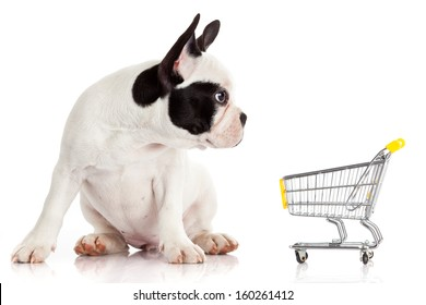 French Bulldog with shopping cart isolated on white. Funny little dog.