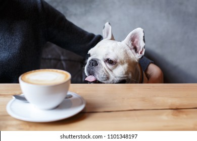 French bulldog sitting in the cafeteria. Near him a cup of coffee on the wooden table. His master sits next to him and affectionately embraces him.