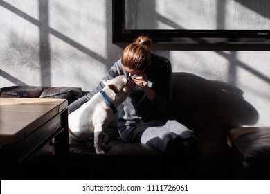 French bulldog sitting in the cafeteria on sofa. The owner plays with him and feeds hom from own hands.