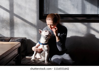 French bulldog sitting in the cafeteria on the sofa. The owner plays with him and looks at the reaction of the dog who wants to take the delicacies more quickly.