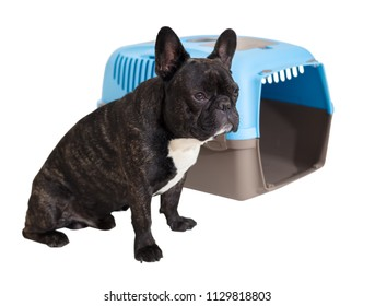 French Bulldog sitting next to an animal carrier on white isolated background