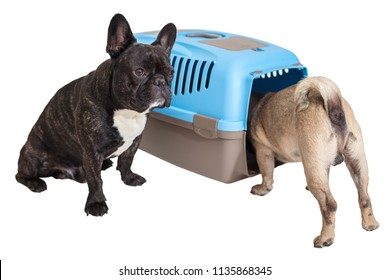 French Bulldog sitting next to an animal carrier and pug on white isolated background