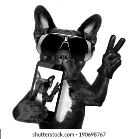 french bulldog  taking a selfie with cool fancy sunglasses