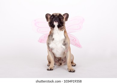 french bulldog with wings