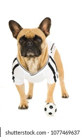 French bulldog wirh soccer outfit isolated on white background