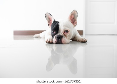 french bulldog's naping on the floor waiting in the house