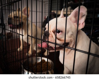 French bulldogs stuck inside cage, low key tone