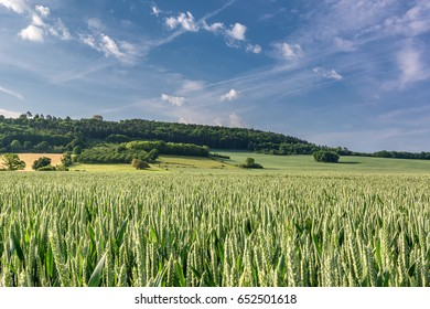French countryside. Typical landscape with view over the Lorraine wheat fields in the morning.