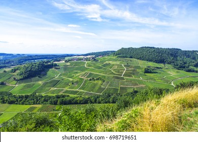 French Countryside Vineyard On A Hill