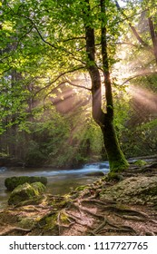 French landscape - Jura. Small river in the Jura mountains with sunbeams shining through tree.