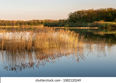 French landscape - Lorraine. A small lake at sunset with reeds in the foreground.
