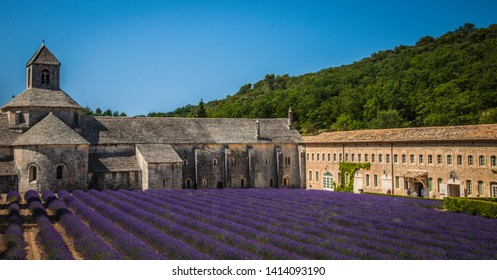 French lavender field at Abbey of Senanque  Gordes, Luberon, Vaucluse, Provence, France, Europe.