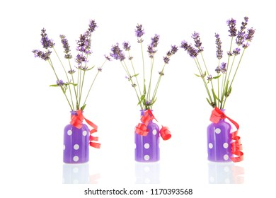 French Lavender in little vases isolated over white background