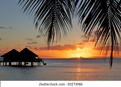 French polynesia islands palm tree sunset