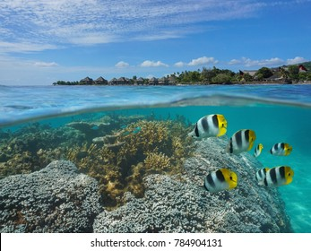 French Polynesia Tahiti island over and under sea surface in the lagoon, coral and tropical fish underwater with a resort on the seashore, Punaauia, Pacific ocean