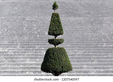 french pruned shrub in Versailles