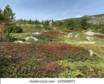 French Pyrenees mountains landscape during summer season