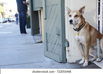 French Quarter Dog