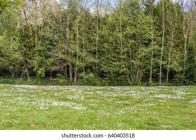 French rural meadowland with wildflowers and forrest