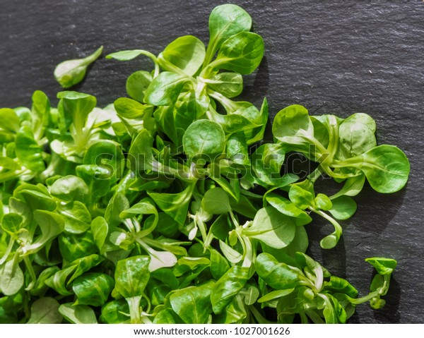 French Salad Lambs Lettuce On Slate Stock Photo Edit Now 1027001626
