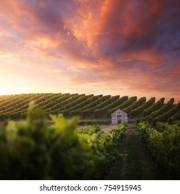 French vineyard at sunset