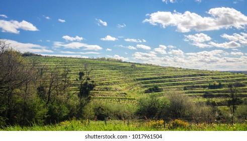French vineyard under the sun