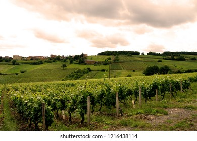 French Wine Yards Countryside