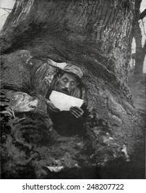 French WW1 soldier in a dugout tree reading a letter. 1916-17. He is near Monastir, on the Macedonia Front.