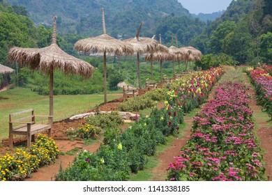 fresh air at royal agricultural station angkhang, Chiang Mai, Thailand