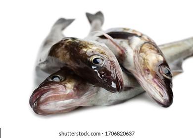 Fresh alaska pollock fish isolated on white background