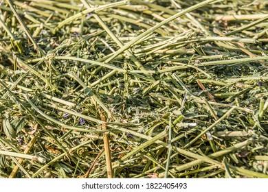 Fresh alfalfa hay as background