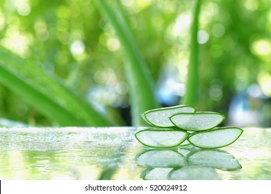 Fresh aloe vera leaves with water drop with soft green background