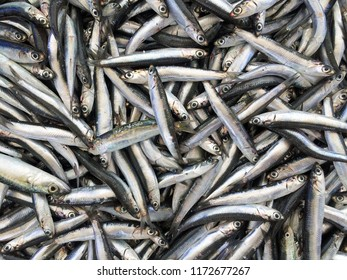 Fresh anchovies background