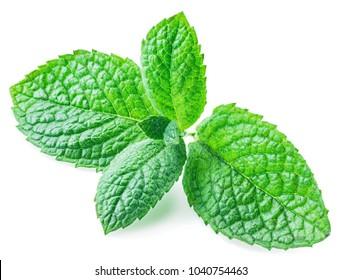 Fresh apple mint. Close-up. Isolated on white background.