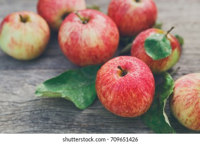Fresh apples closeup, harvest background on rustic wood