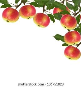 Fresh apples isolated on white background