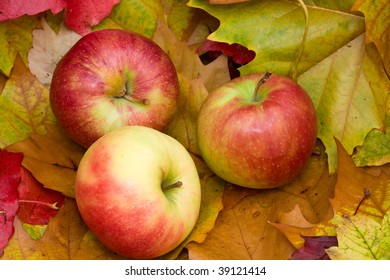 Fresh apples - NEW harvest Three delicious, fresh apples lying on colorful leaves.