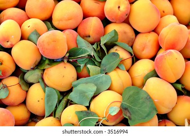 Fresh apricots for sale in a bin at the outdoor Farmer's Market
