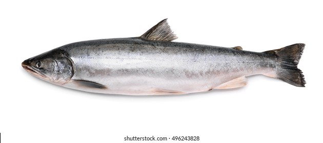 Fresh arctic char isolated on white