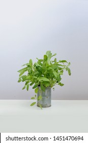Fresh aromatic culinary herbs. Bunch of sage on a white background