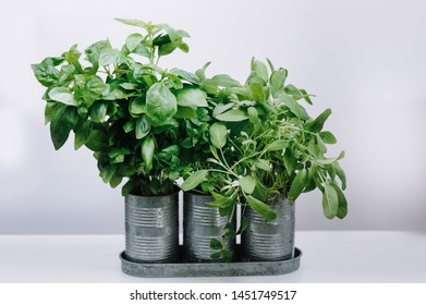 Fresh aromatic culinary herbs. Bunch of basil, greek basil and sage on a white background